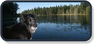 Photograph of Chickadee Lake on Denman Island, BC with lily pads and forest of firs, cedars, hemlock and alder in background. Abbey the H2O mascot dog is diligently guarding the lake on the dock in the foreground.